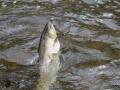 Fishing 20